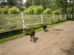 East_Hill_Farm_42_op_640x480